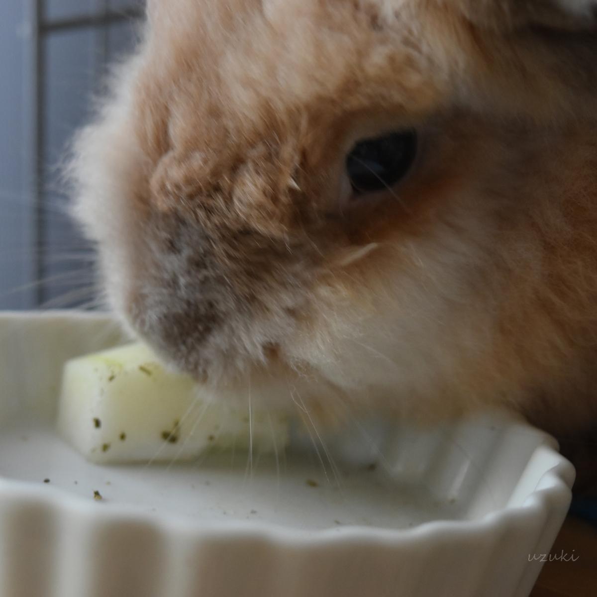 冬瓜を食べるうさぎのアップ