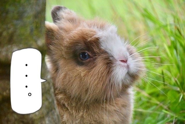 遠い目のウサギ