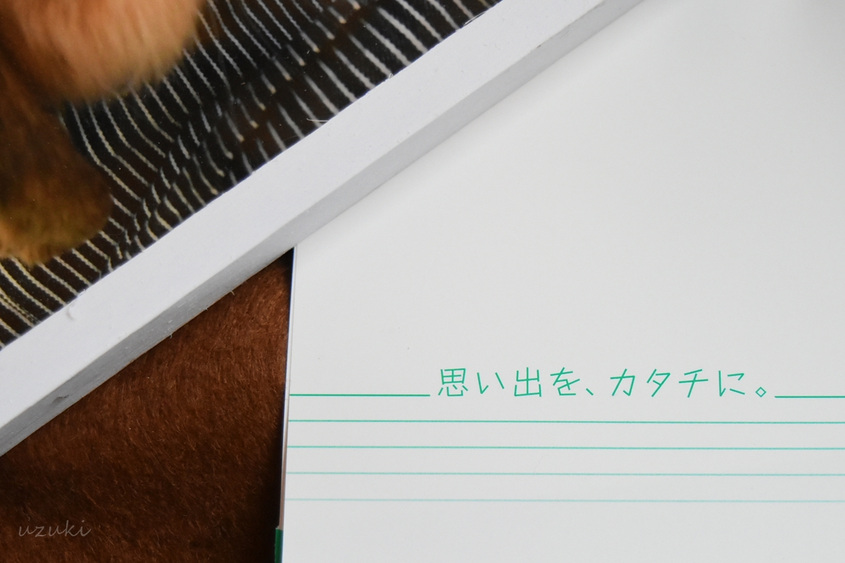 フジカラープリントの封筒