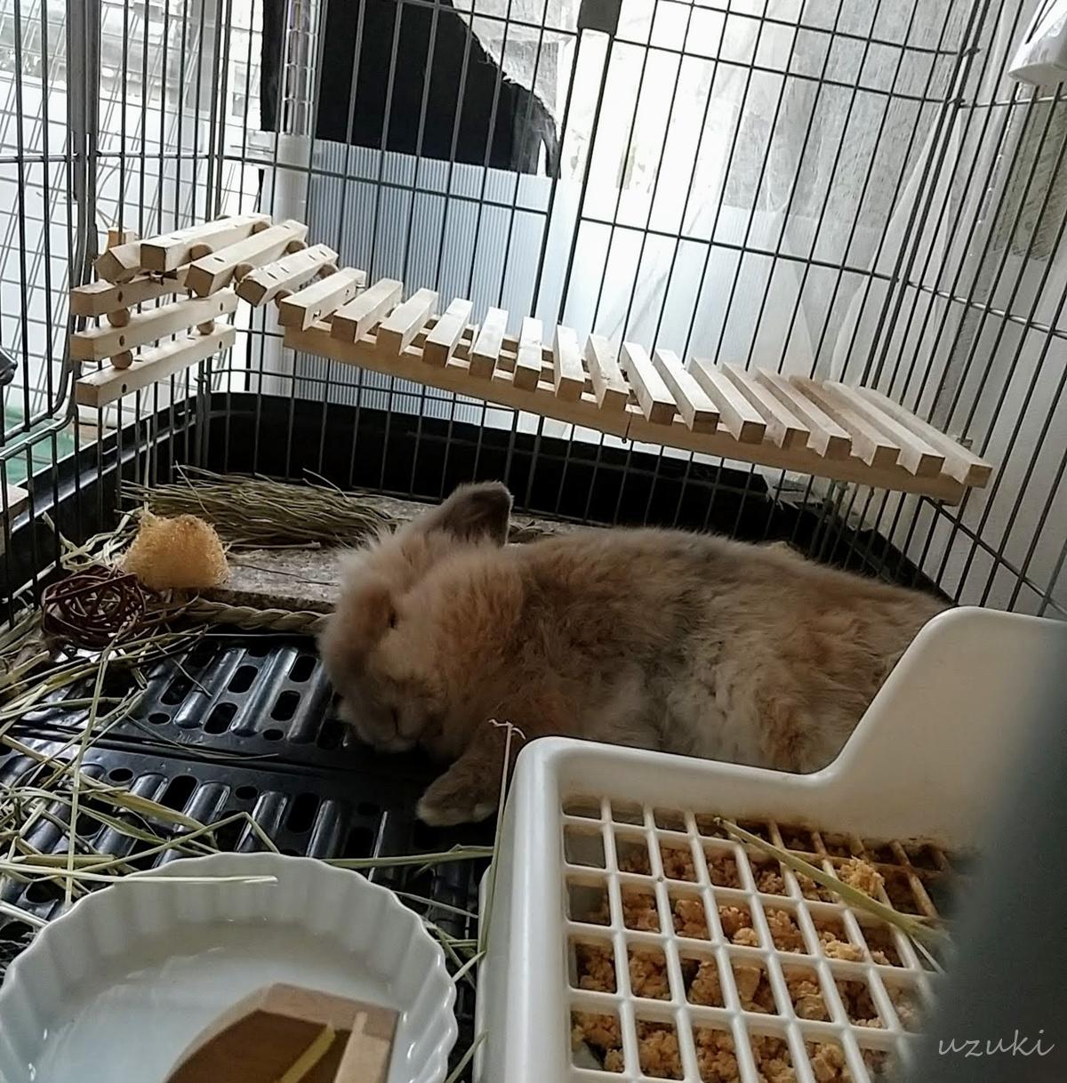 ケージで眠るうさぎ