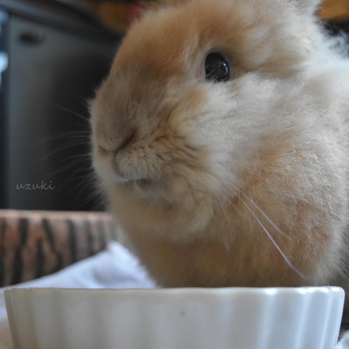 朝ごはんを食べているうさぎの小二郎
